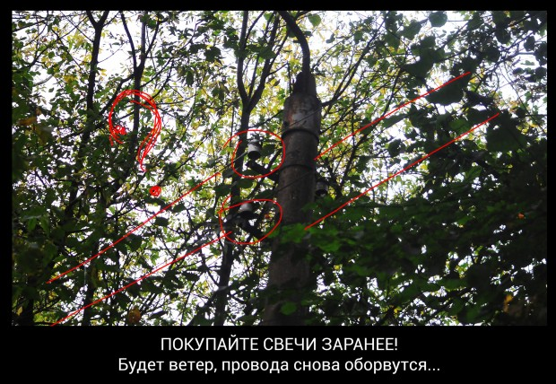 Не обрезаются деревья на Кабакова, 73